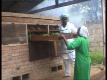 Drying of Moringa in Biomass drier 5