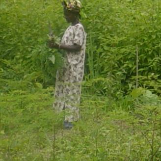 Salamatu Adisa in her moringa farm