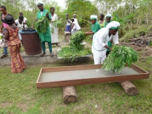 Washed moringa leaves ready for drying 2